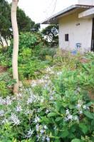 お宅の裏にはレンガの小道のかわいいガーデンが!ハーブなどジャンル毎に分けられたお庭は必見!