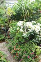 窓辺にゆれるバラやぱっと散らした小さな花々。限られたスペースの中、いたるところで庭主のセンスがi光ります